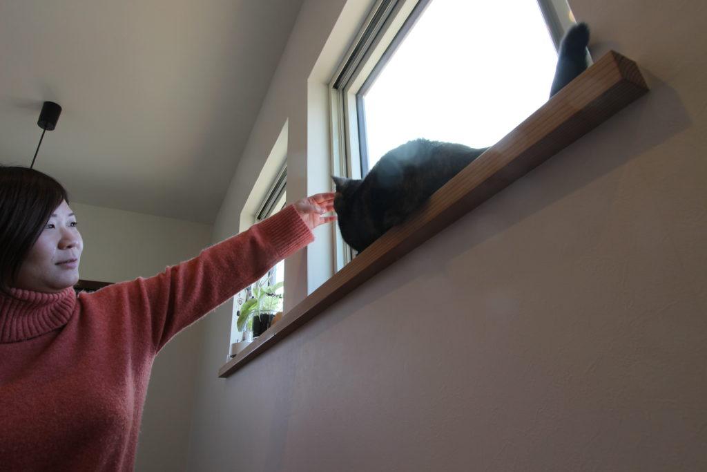 ネコとの暮らしを楽しむ家