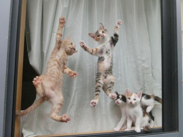 猫さんと暮らす方のための網戸~ペットネット